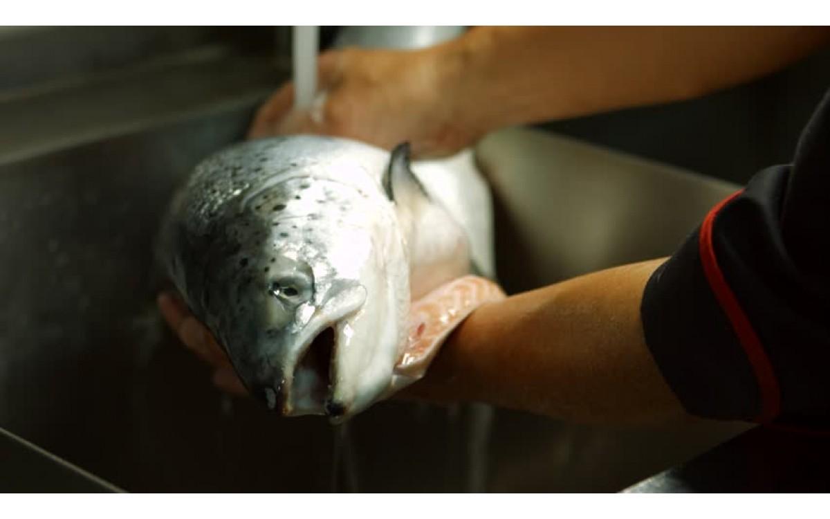 Jak przygotować rybę do wędzenia